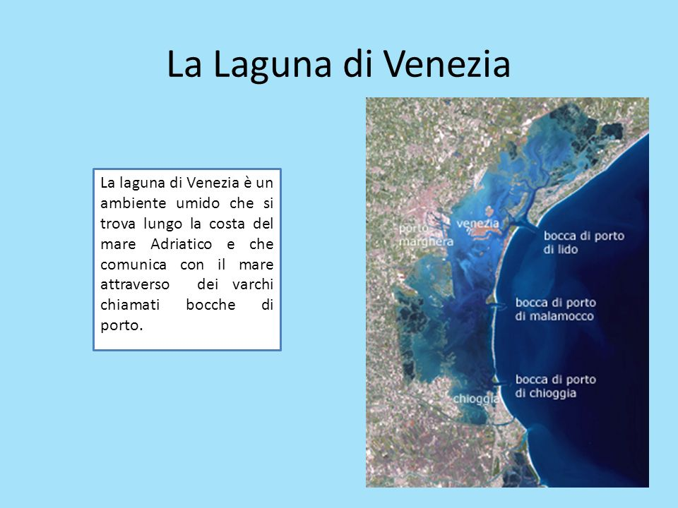 La Laguna di Venezia La laguna di Venezia è un ambiente umido che si trova lungo la costa del mare Adriatico e che comunica con il mare attraverso dei