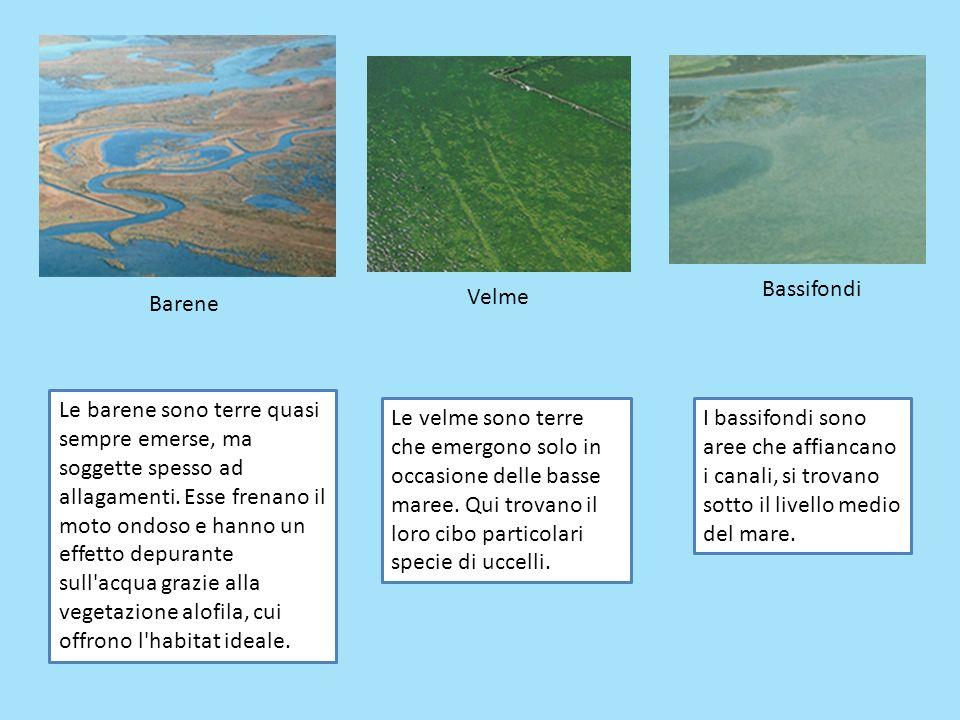 Barene Velme Bassifondi Le barene sono terre quasi sempre emerse, ma soggette spesso ad allagamenti. Esse frenano il moto ondoso e hanno un effetto de