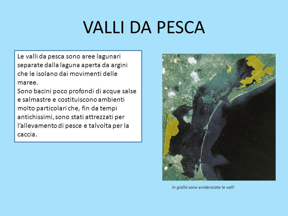 VALLI DA PESCA Le valli da pesca sono aree lagunari separate dalla laguna aperta da argini che le isolano dai movimenti delle maree. Sono bacini poco
