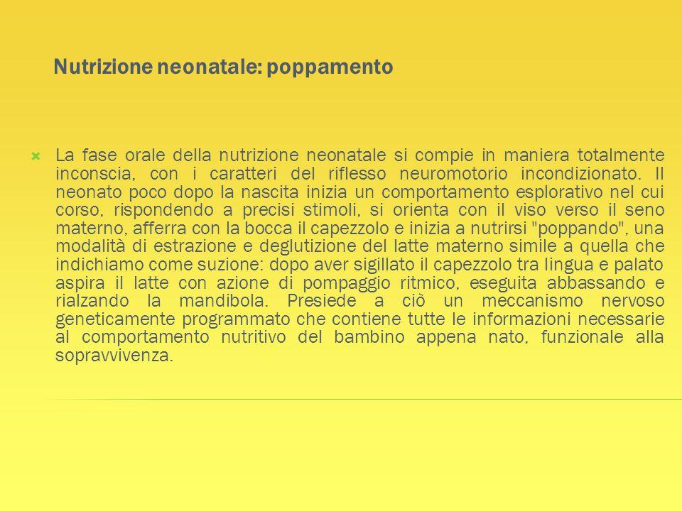 Nutrizione neonatale: poppamento La fase orale della nutrizione neonatale si compie in maniera totalmente inconscia, con i caratteri del riflesso neur