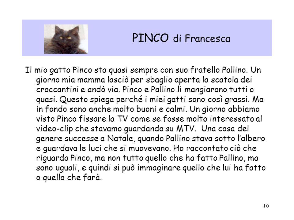 16 PINCO di Francesca Il mio gatto Pinco sta quasi sempre con suo fratello Pallino. Un giorno mia mamma lasciò per sbaglio aperta la scatola dei crocc
