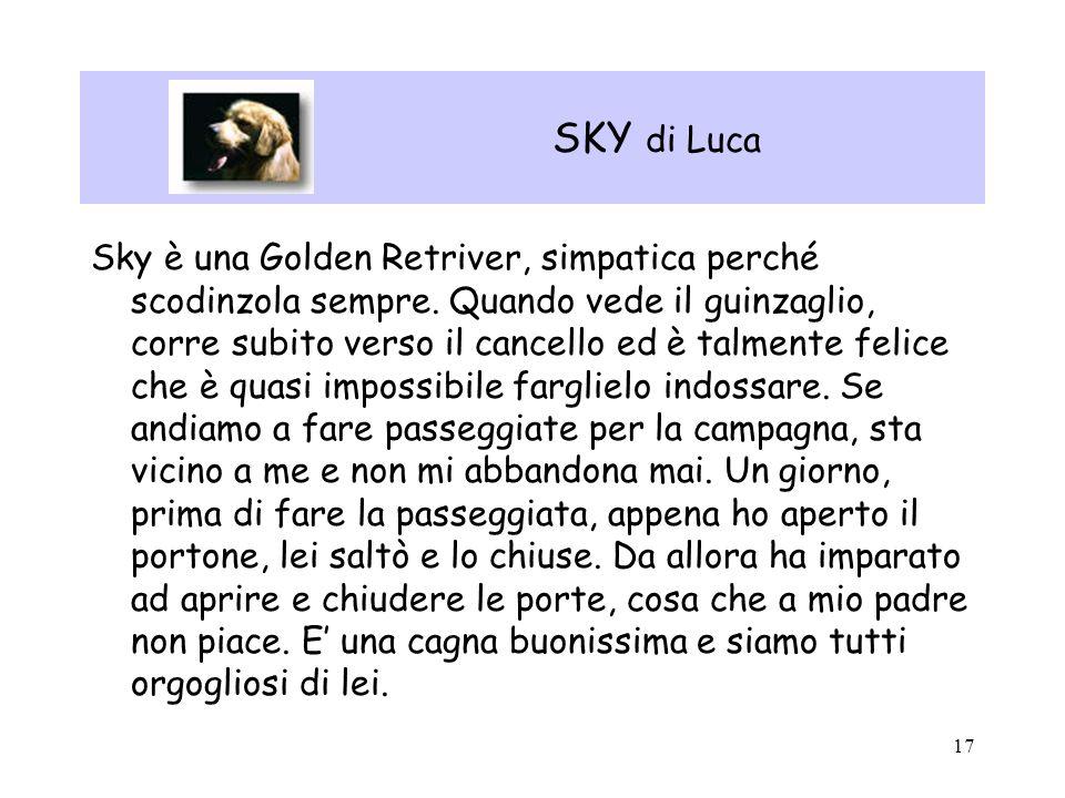 17 SKY di Luca Sky è una Golden Retriver, simpatica perché scodinzola sempre. Quando vede il guinzaglio, corre subito verso il cancello ed è talmente