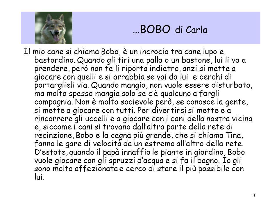 3 …BOBO di Carla Il mio cane si chiama Bobo, è un incrocio tra cane lupo e bastardino. Quando gli tiri una palla o un bastone, lui li va a prendere, p