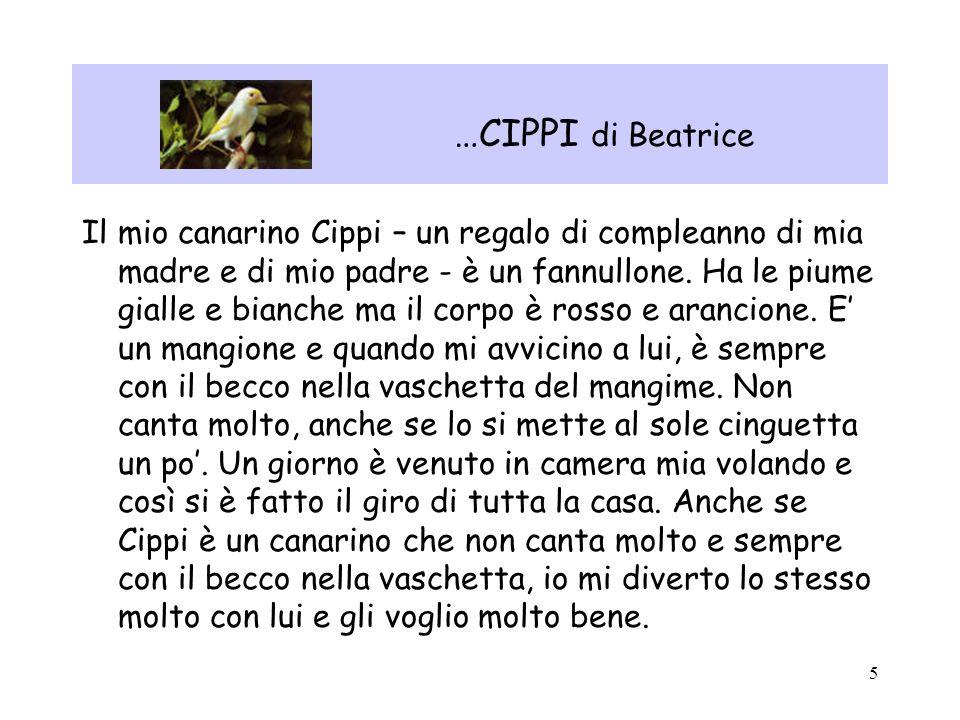 5 …CIPPI di Beatrice Il mio canarino Cippi – un regalo di compleanno di mia madre e di mio padre - è un fannullone. Ha le piume gialle e bianche ma il