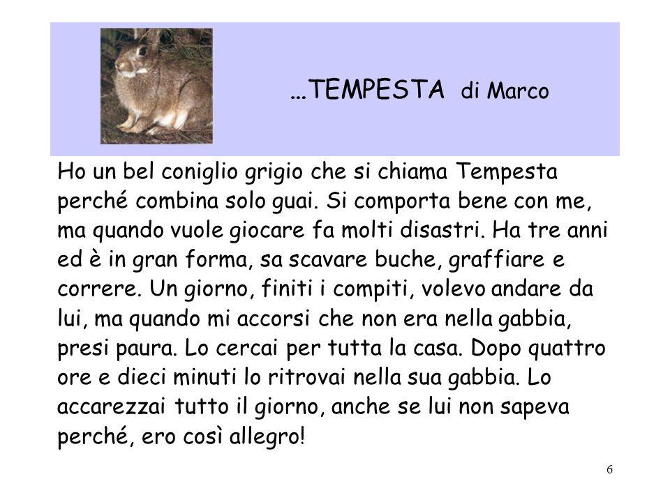 6 …TEMPESTA di Marco Ho un bel coniglio grigio che si chiama Tempesta perché combina solo guai. Si comporta bene con me, ma quando vuole giocare fa mo