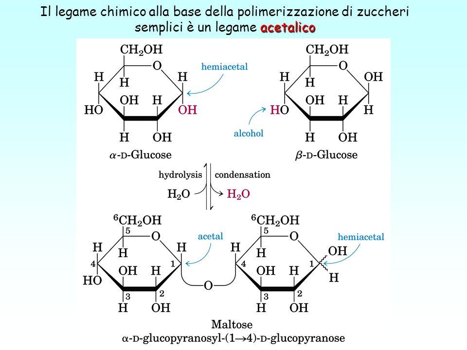 acetalico Il legame chimico alla base della polimerizzazione di zuccheri semplici è un legame acetalico