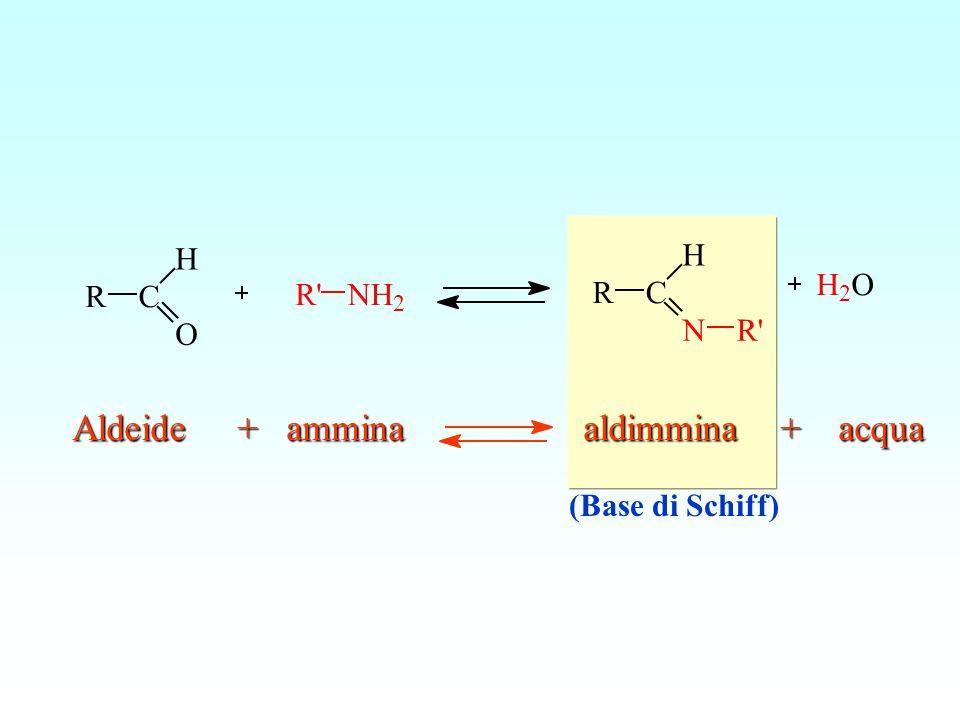 RC H O R'NH 2 RC H NR' H 2 O Aldeide + ammina aldimmina + acqua (Base di Schiff)