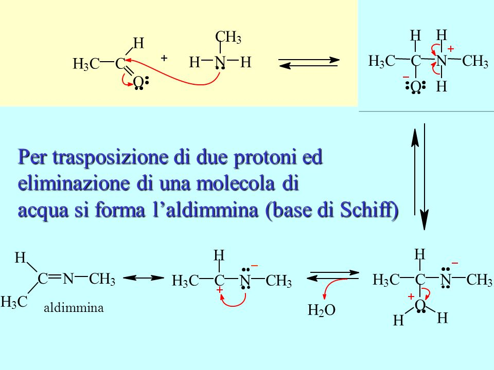 Lammina conduce un attacco nucleofilo sul carbonio carbonilico Per trasposizione di due protoni ed eliminazione di una molecola di acqua si forma lald