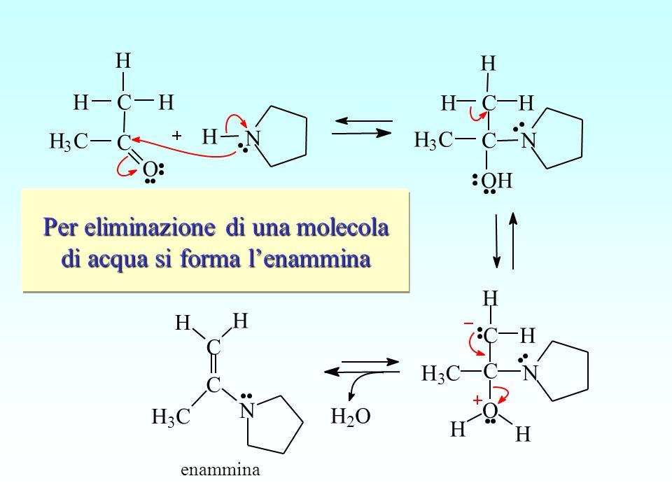 Lammina secondaria compie un attacco nucleofilo sul carbonio carbonilico N O C C H 3 C H H H H N C C H 3 C H H enammina H 3 C C C O H HH N H N OH C C