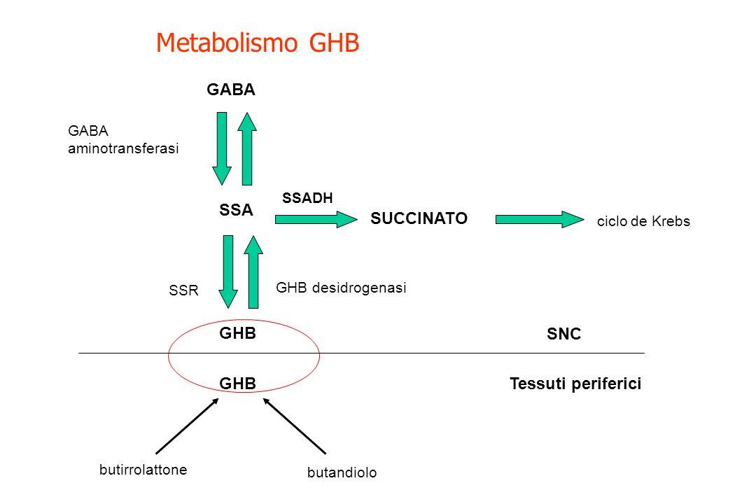 SSR SSA GABA aminotransferasi GHB desidrogenasi ciclo de Krebs GABA butirrolattone butandiolo GHB SUCCINATO Metabolismo GHB SSADH Tessuti periferici S