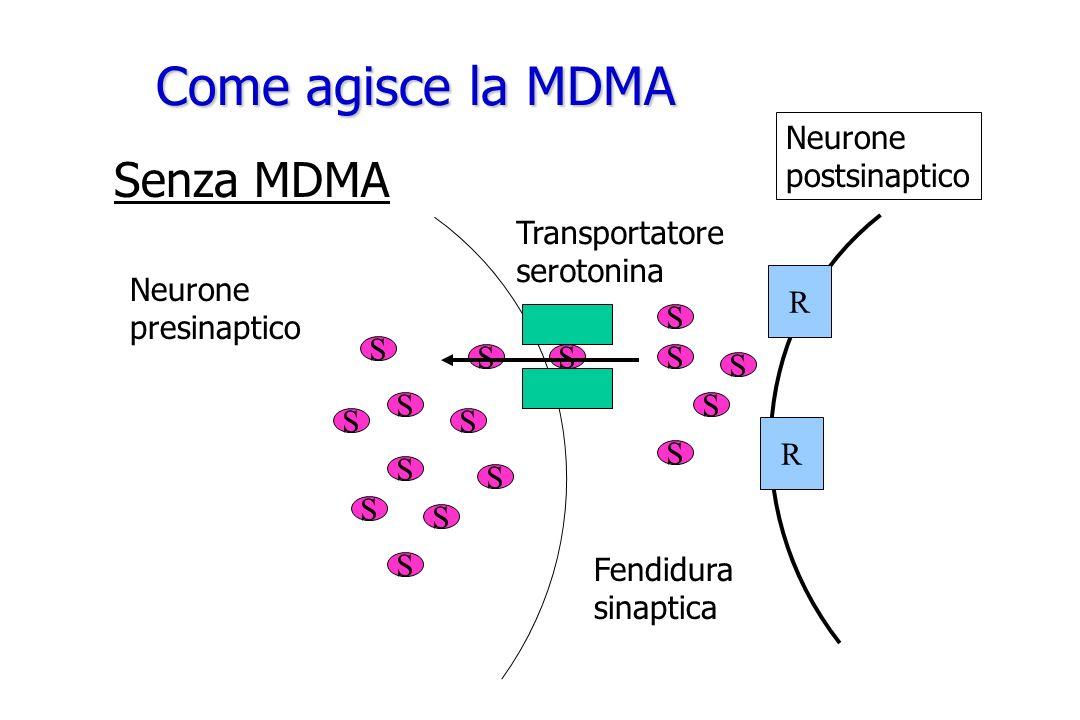 Come agisce la MDMA Neurone presinaptico Transportatore serotonina SSS S S S S Fendidura sinaptica Senza MDMA S S S S S S S S S R R Neurone postsinapt