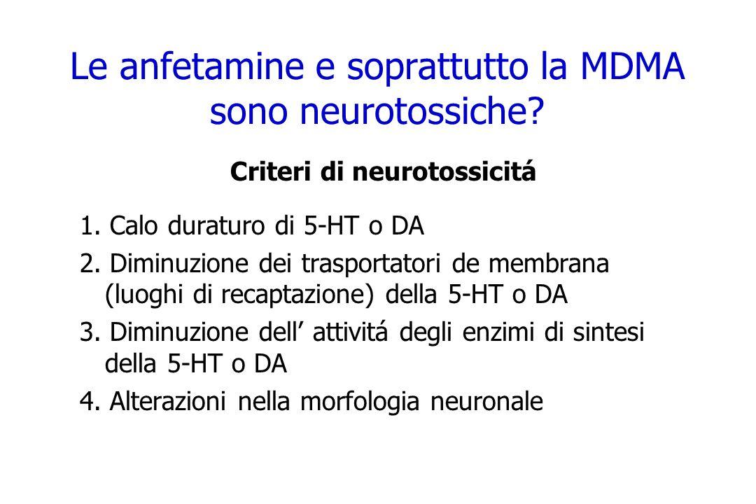 Le anfetamine e soprattutto la MDMA sono neurotossiche? Criteri di neurotossicitá 1. Calo duraturo di 5-HT o DA 2. Diminuzione dei trasportatori de me