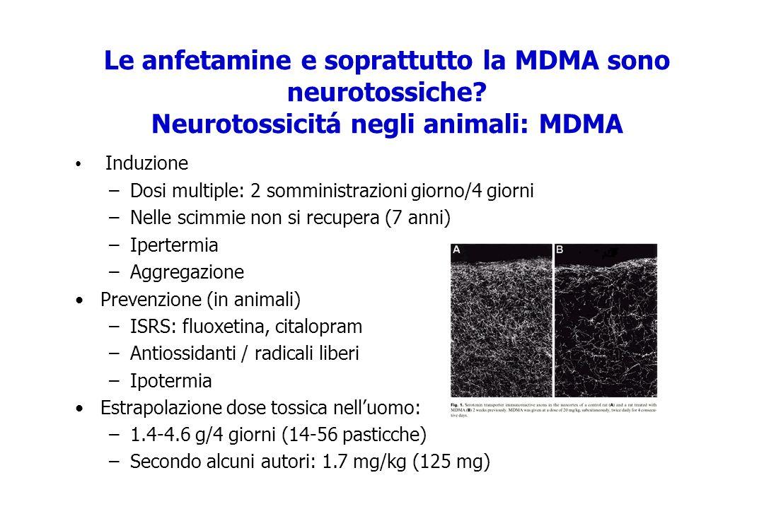 Le anfetamine e soprattutto la MDMA sono neurotossiche? Neurotossicitá negli animali: MDMA Induzione –Dosi multiple: 2 somministrazioni giorno/4 giorn