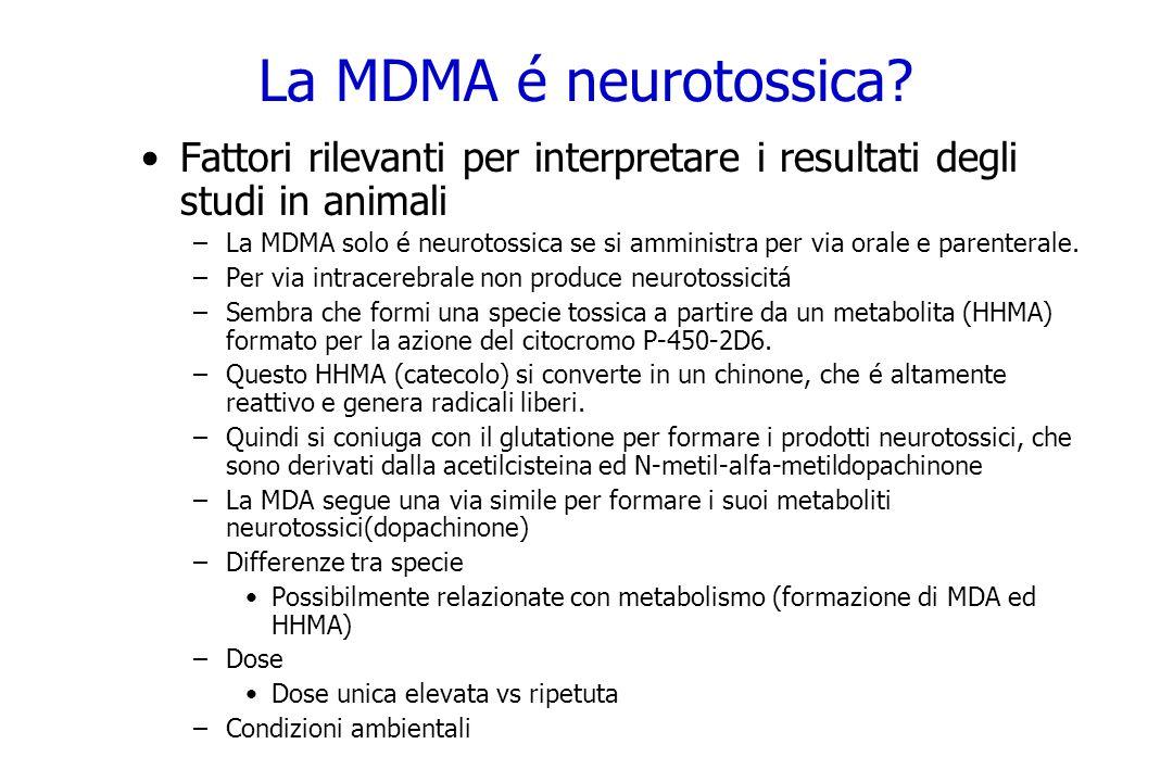 La MDMA é neurotossica? Fattori rilevanti per interpretare i resultati degli studi in animali –La MDMA solo é neurotossica se si amministra per via or
