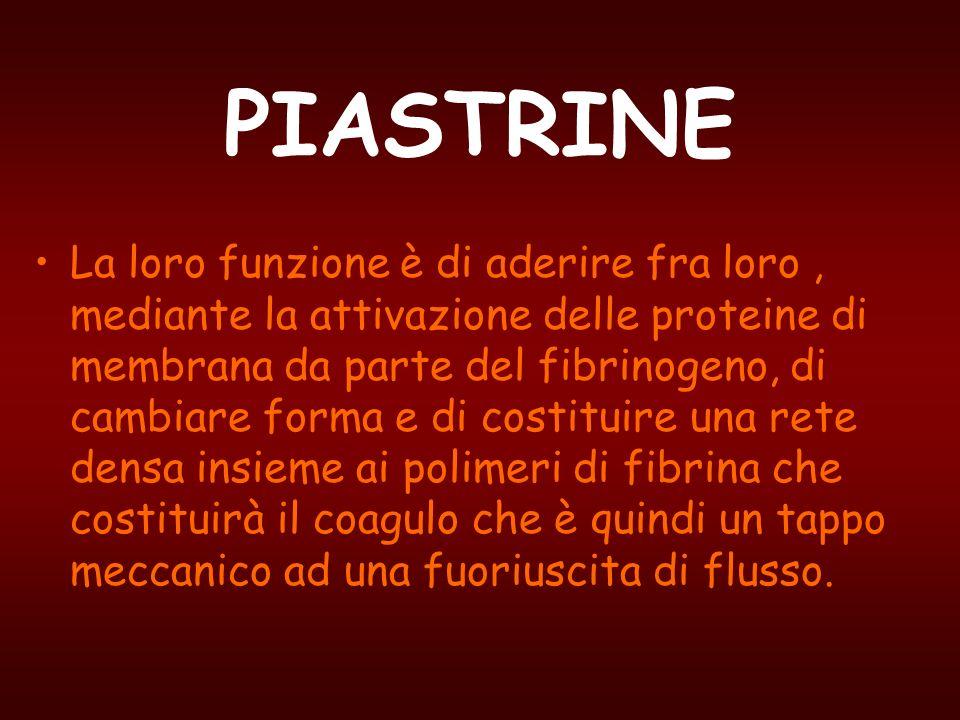 PIASTRINE La loro funzione è di aderire fra loro, mediante la attivazione delle proteine di membrana da parte del fibrinogeno, di cambiare forma e di