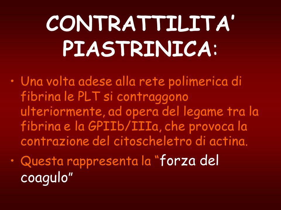 CONTRATTILITA PIASTRINICA: Una volta adese alla rete polimerica di fibrina le PLT si contraggono ulteriormente, ad opera del legame tra la fibrina e l