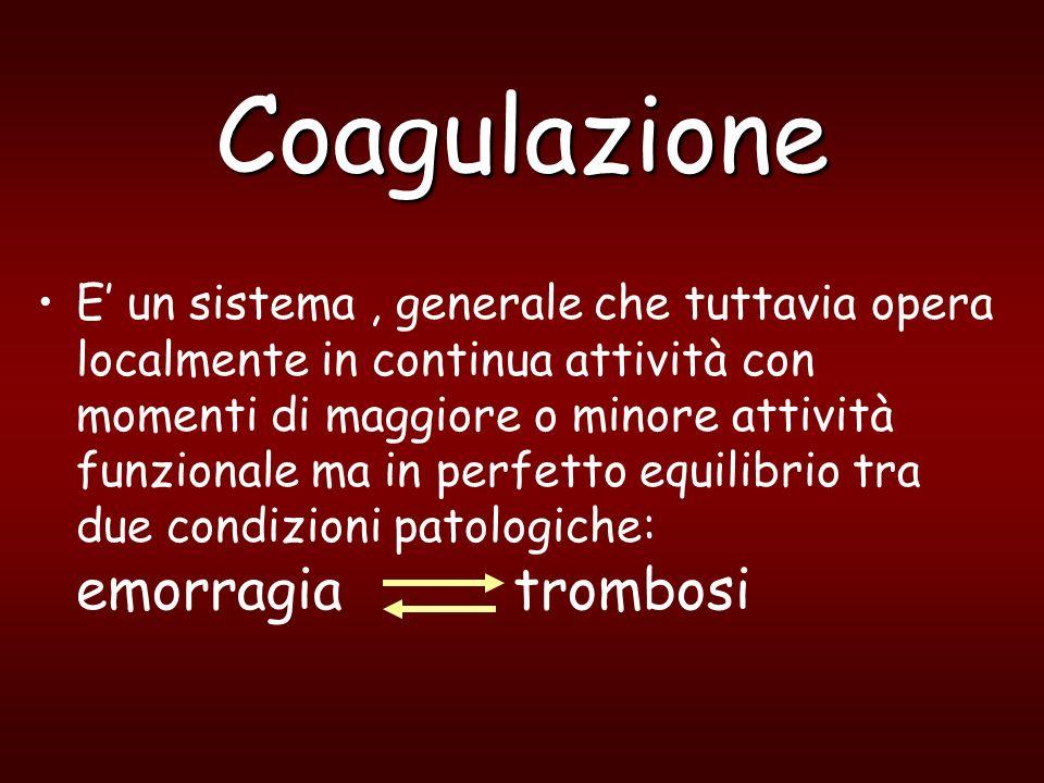 Coagulazione Il principale attivatore della coagulazione è il Fattore Tessutale presente su tutte le membrane cellulari ad eccezione di quella piastrinica.