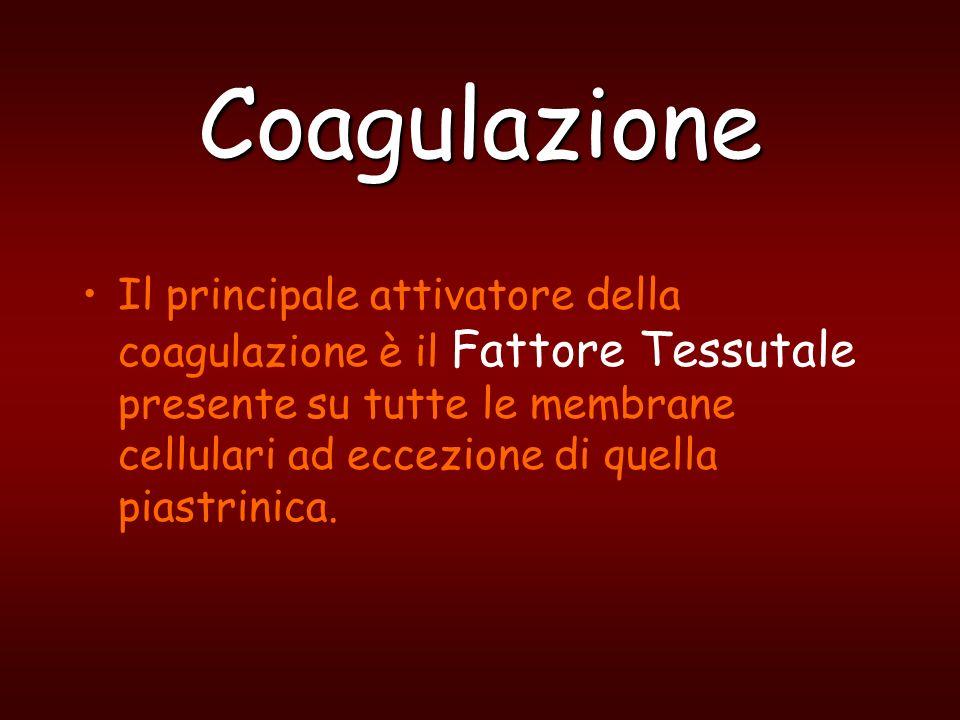 Coagulazione Quando si ha una lesione vascolare con liberazione di Tissue Factor o quando le proteine ematiche della coagulazione o le PLT si attivano ad opera di sostanze o superfici estranee allorganismo si arriva alla formazione del coagulo, che è un impedimento meccanico e temporaneo allemorragia