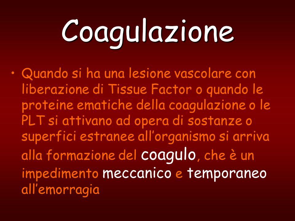 Coagulazione Quando si ha una lesione vascolare con liberazione di Tissue Factor o quando le proteine ematiche della coagulazione o le PLT si attivano