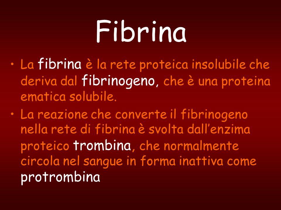 La fibrina è la rete proteica insolubile che deriva dal fibrinogeno, che è una proteina ematica solubile. La reazione che converte il fibrinogeno nell