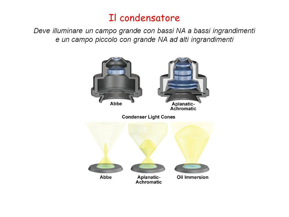 Il condensatore Deve illuminare un campo grande con bassi NA a bassi ingrandimenti e un campo piccolo con grande NA ad alti ingrandimenti