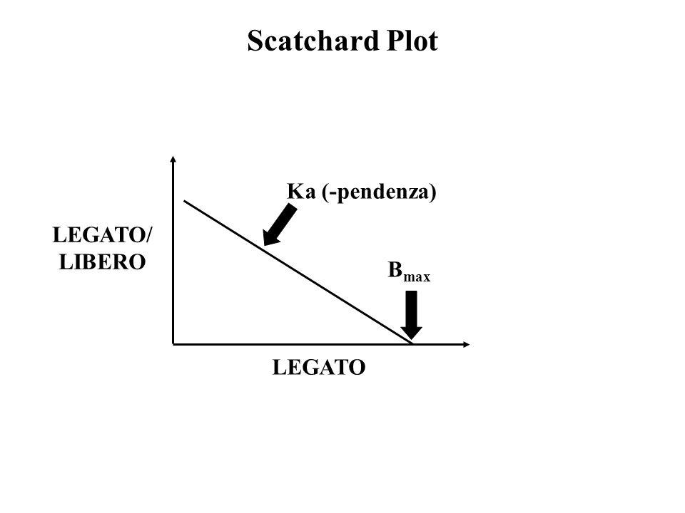 Scatchard Plot LEGATO LEGATO/ LIBERO B max Ka (-pendenza)