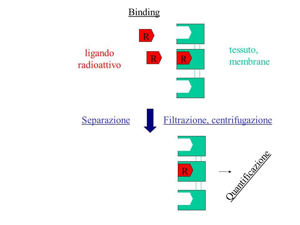 Binding R R R SeparazioneFiltrazione, centrifugazione ligando radioattivo tessuto, membrane R Quantificazione