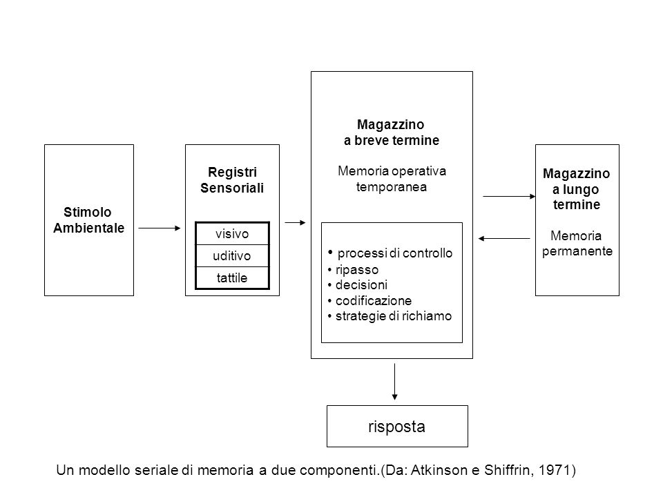 Stimolo Ambientale Registri Sensoriali Magazzino a breve termine Memoria operativa temporanea Magazzino a lungo termine Memoria permanente risposta vi