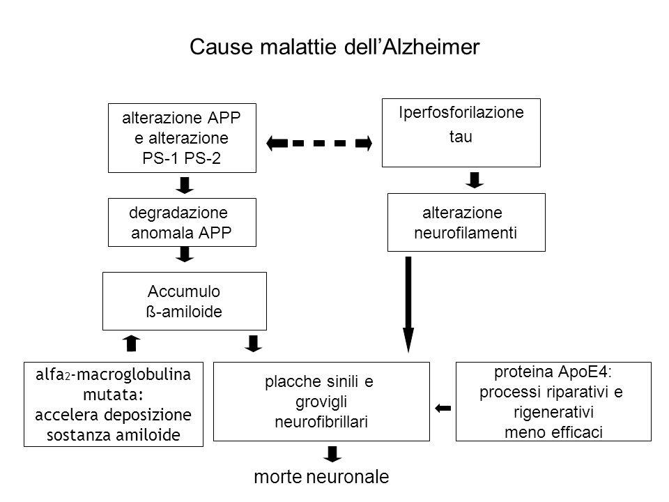Cause malattie dellAlzheimer alterazione APP e alterazione PS-1 PS-2 Iperfosforilazione tau degradazione anomala APP Accumulo ß-amiloide alterazione n