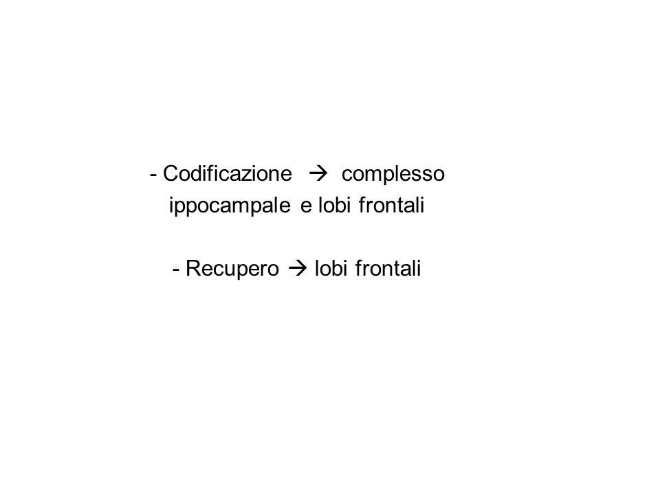 - Codificazione complesso ippocampale e lobi frontali - Recupero lobi frontali