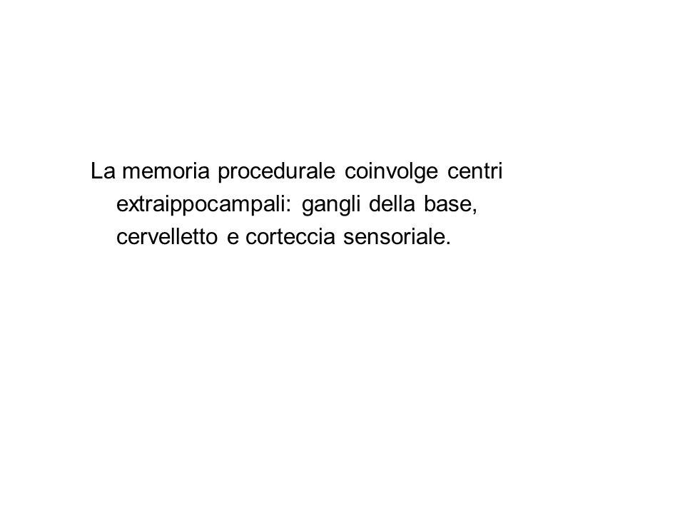 La memoria procedurale coinvolge centri extraippocampali: gangli della base, cervelletto e corteccia sensoriale.