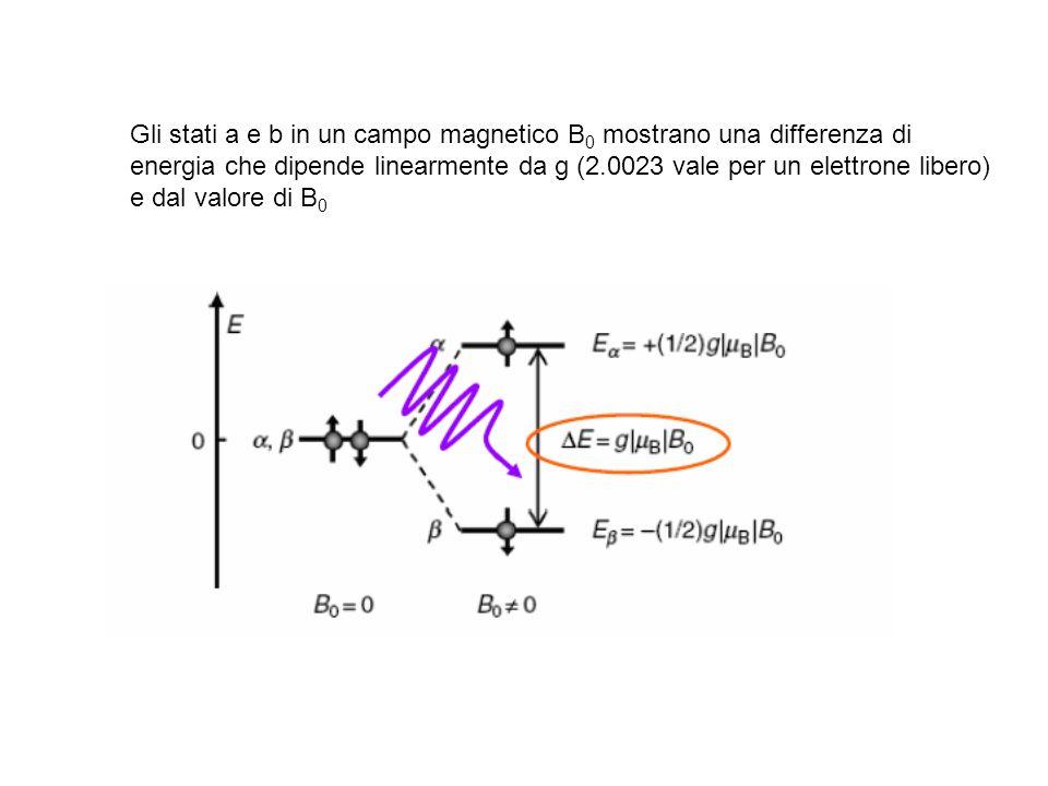 Gli stati a e b in un campo magnetico B 0 mostrano una differenza di energia che dipende linearmente da g (2.0023 vale per un elettrone libero) e dal