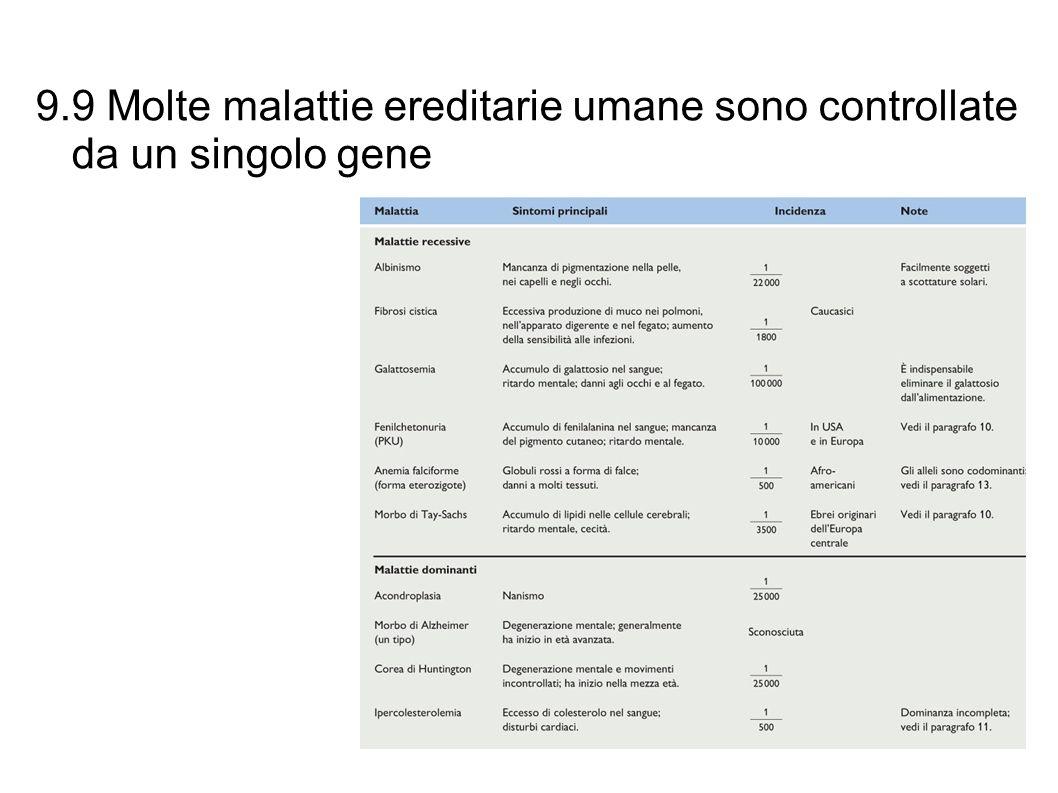 9.9 Molte malattie ereditarie umane sono controllate da un singolo gene Alcuni esempi di malattie ereditarie umane: Tabella 9.9
