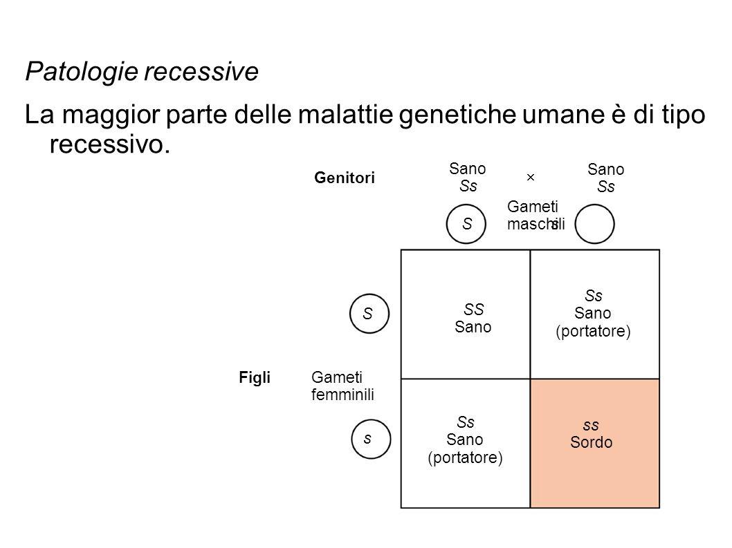 Gli alleli recessivi legati al sesso che determinano alcune malattie sono localizzati sul cromosoma X.