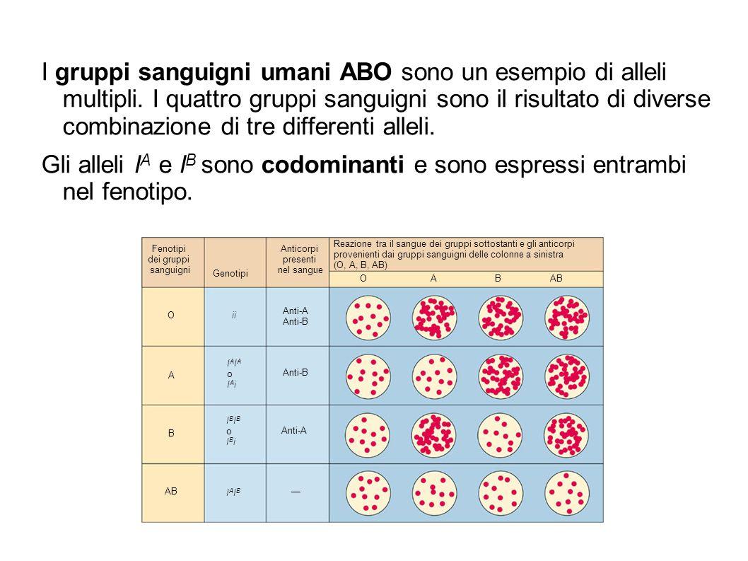 I gruppi sanguigni umani ABO sono un esempio di alleli multipli. I quattro gruppi sanguigni sono il risultato di diverse combinazione di tre different