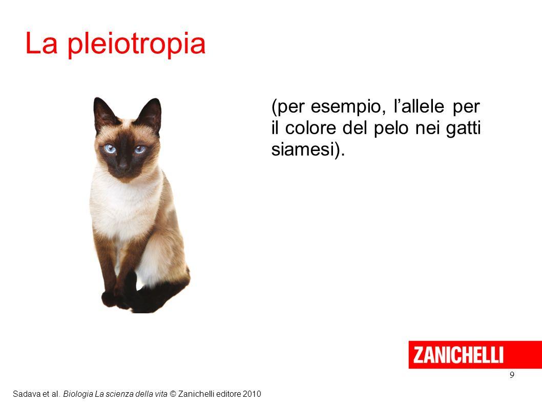 9 Sadava et al. Biologia La scienza della vita © Zanichelli editore 2010 (per esempio, lallele per il colore del pelo nei gatti siamesi). La pleiotrop