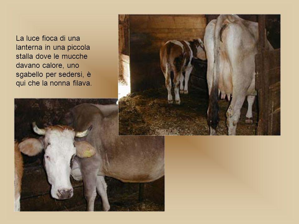La luce fioca di una lanterna in una piccola stalla dove le mucche davano calore, uno sgabello per sedersi, è qui che la nonna filava.