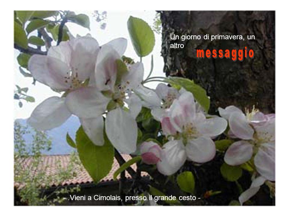Un giorno di primavera, un altro -.Vieni a Cimolais, presso il grande cesto -