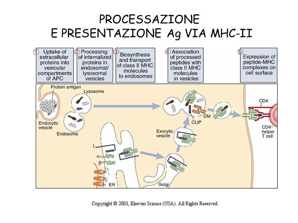 PROCESSAZIONE E PRESENTAZIONE Ag VIA MHC-II