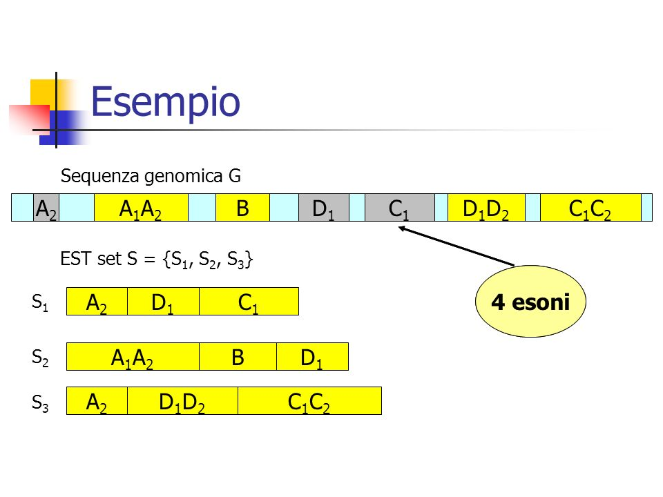 Esempio Sequenza genomica G EST set S = {S 1, S 2, S 3 } S2S2 A1A2A1A2 BD1D1 S3S3 A2A2 D1D2D1D2 C1C2C1C2 A2A2 A1A2A1A2 BD1D1 C1C1 D1D2D1D2 C1C2C1C2 C1