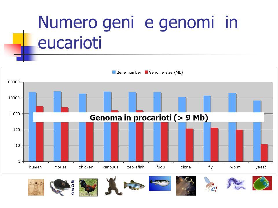 Numero geni e genomi in eucarioti Number of genes in prokaryotes (up to 8000) Genoma in procarioti (> 9 Mb)