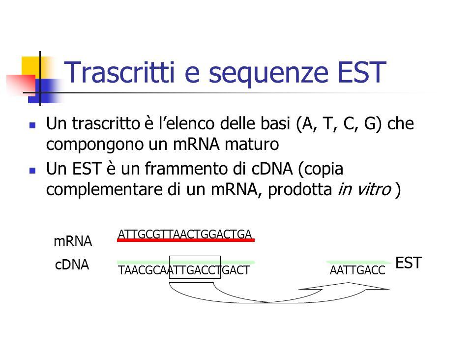 Trascritti e sequenze EST Un trascritto è lelenco delle basi (A, T, C, G) che compongono un mRNA maturo Un EST è un frammento di cDNA (copia complemen