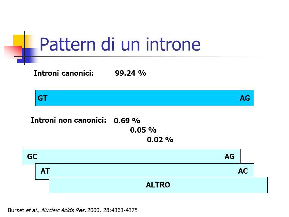 Pattern di un introne GT AG Introni canonici: 99.24 % Introni non canonici: GCAG 0.05 % 0.69 % 0.02 % ATAC ALTRO Burset et al., Nucleic Acids Res. 200