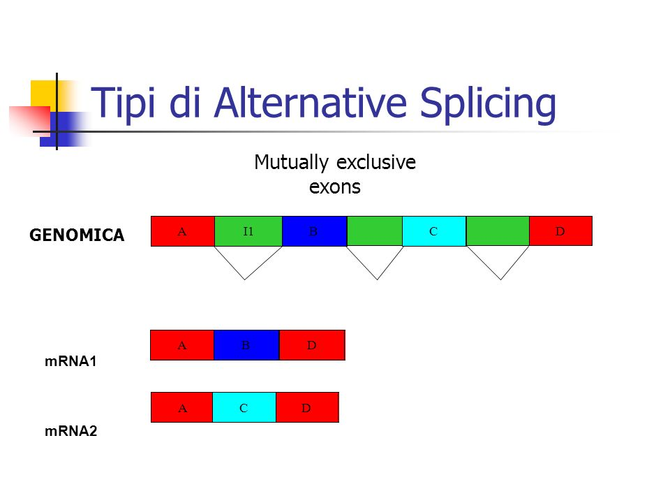 Tipi di Alternative Splicing ABCD mRNA1 AI1 C D B GENOMICA Splice/dont splice mRNA2 A I1 BCD Competing 5 AI1 B A ACD B Competing 3 AI1 B CD B A B Exon