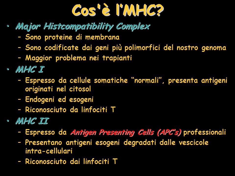 Cos'è lMHC? Major Histcompatibility ComplexMajor Histcompatibility Complex –Sono proteine di membrana –Sono codificate dai geni più polimorfici del no