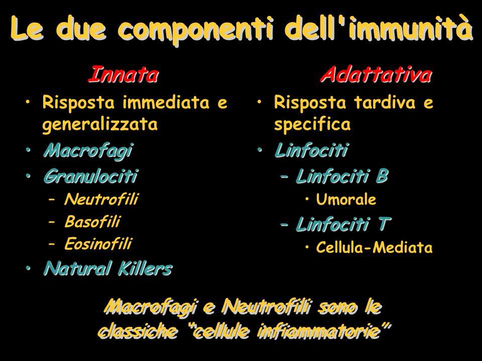 Le due componenti dell'immunità Innata Risposta immediata e generalizzata MacrofagiMacrofagi GranulocitiGranulociti –Neutrofili –Basofili –Eosinofili