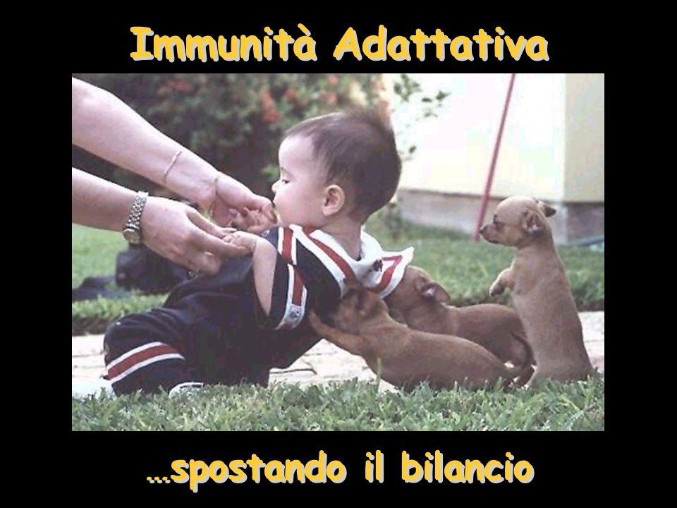 Immunità Adattativa …spostando il bilancio