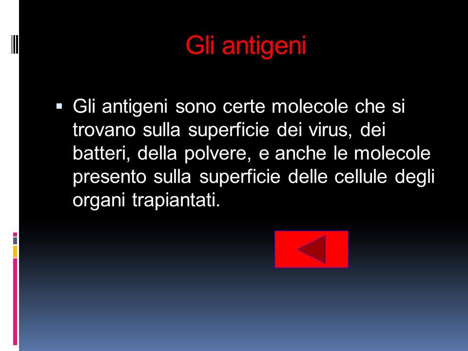 Gli antigeni Gli antigeni sono certe molecole che si trovano sulla superficie dei virus, dei batteri, della polvere, e anche le molecole presento sull