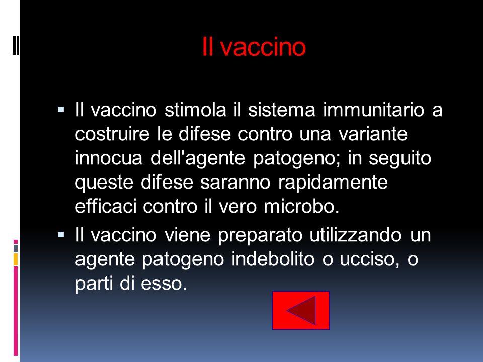 Il vaccino Il vaccino stimola il sistema immunitario a costruire le difese contro una variante innocua dell'agente patogeno; in seguito queste difese