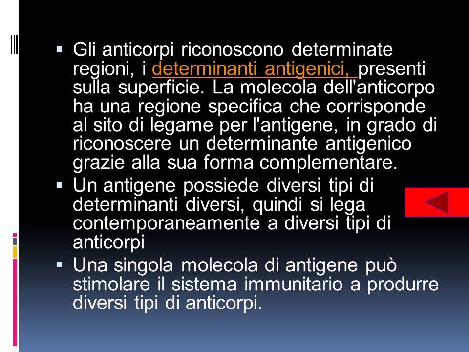 Gli anticorpi riconoscono determinate regioni, i determinanti antigenici, presenti sulla superficie. La molecola dell'anticorpo ha una regione specifi
